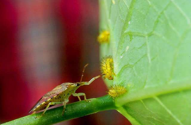 Insect antibiotic provides new way to eliminate bacteria