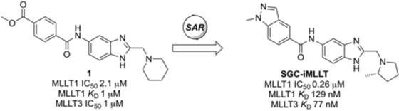 Discovery of selective chemical probes that inhibit epigenetic factors for acute myeloid leukemia