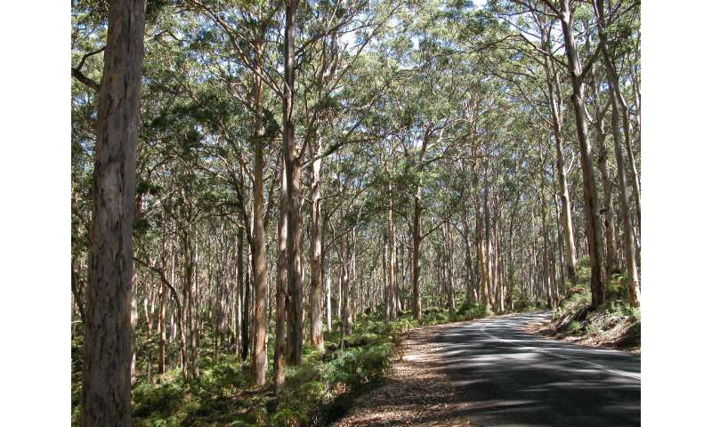 Research finds that now is the time to protect Western Australia's tall forests