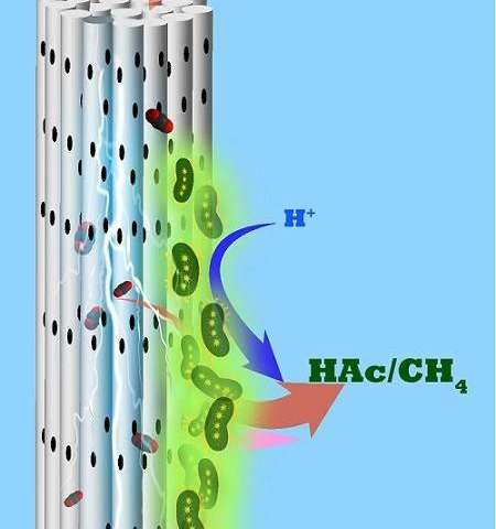 Helpful microbes inhale CO2 through a porous cylindrical electrode and exude useful chemicals