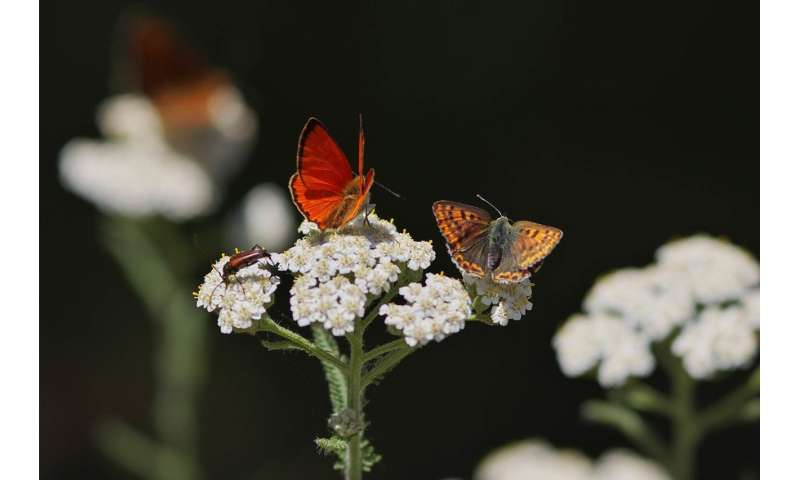European network of protected areas has not yet been able to stop the decline of butterflies in Germany