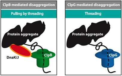 Unwinding a hank of yarn: how do cellular machines unfold misfolded proteins?