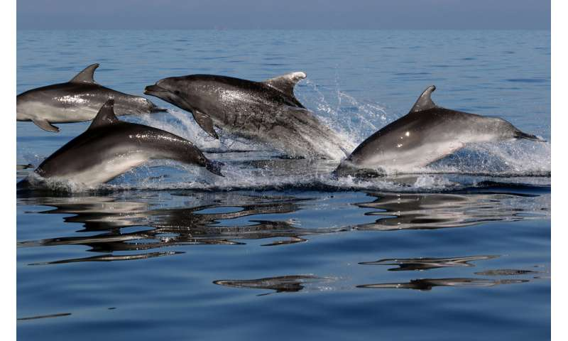 Picky dolphins are choosy about their friends