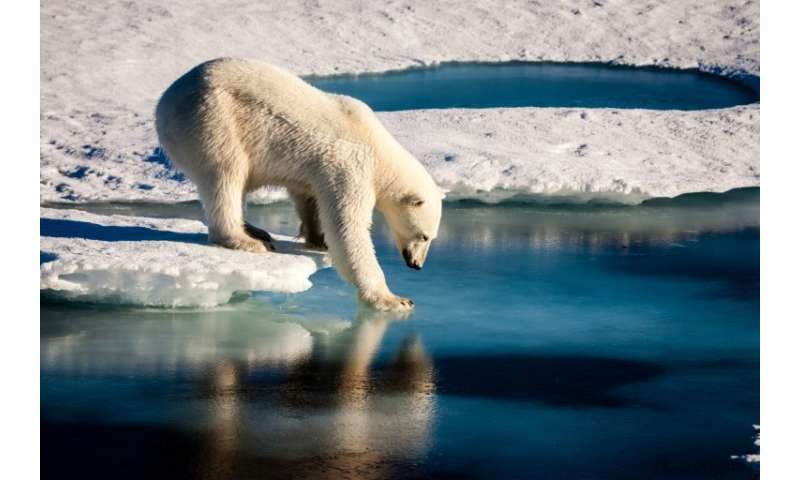 A handout photo provided by the European Geosciences Union on September 13, 2016 shows an undated photo of a polar bear testing