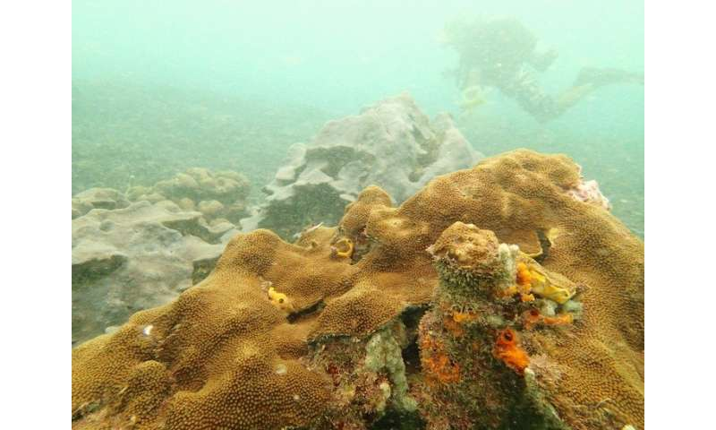 A newly discovered reef offers important lessons in resilience
