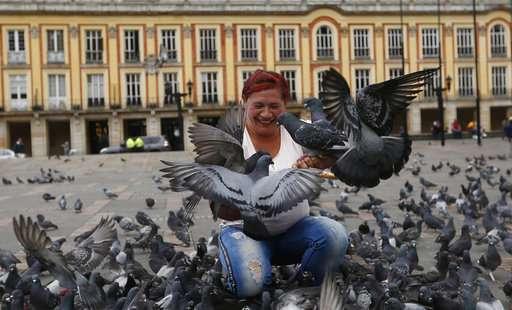 Bogota implores tourists to stop feeding pigeons