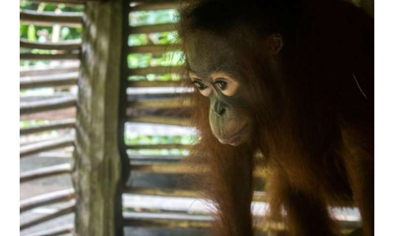 Conservation workers say such rescues are doomed to be repeated unless forest clearing is tackled