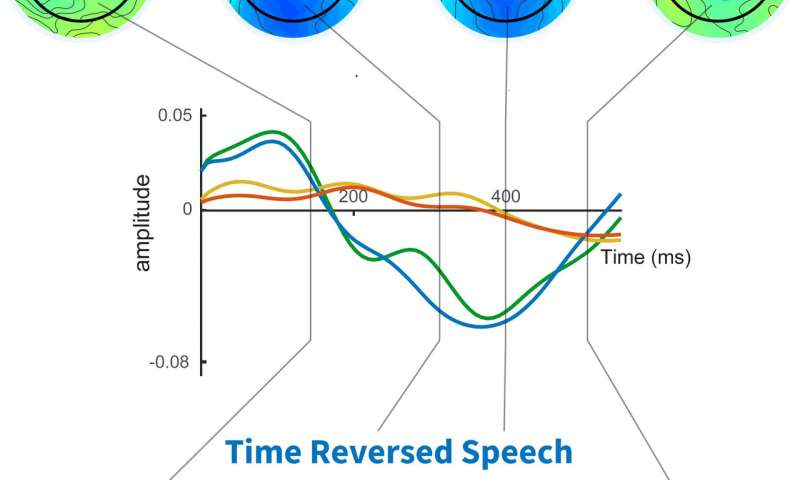 Neuroscientists discover a brain signal that indicates whether speech has been understood