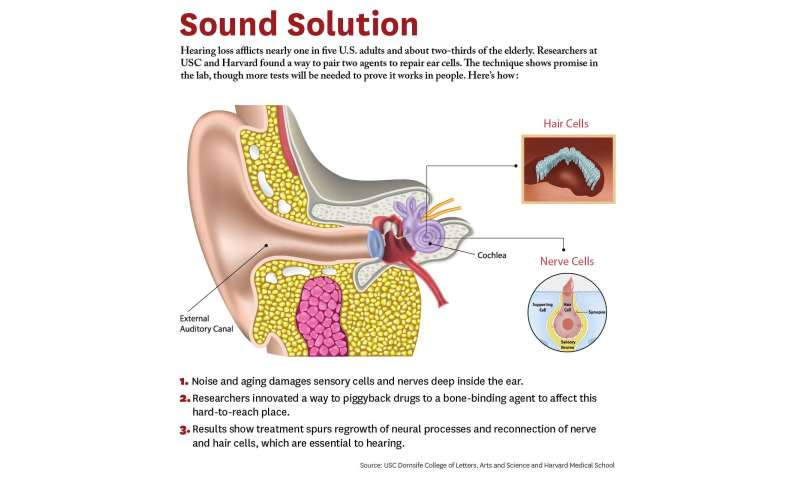 New study shows hope for hearing loss
