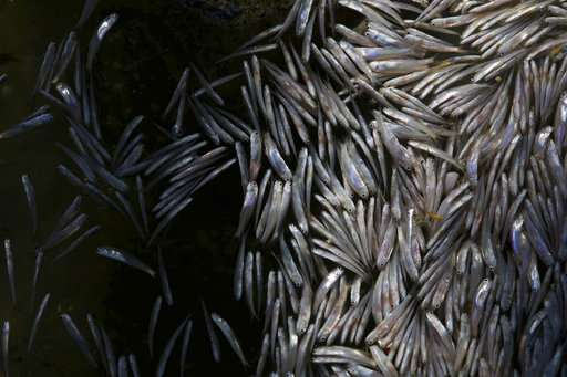 Tons of dead fish wash up in Rio de Janeiro lagoon