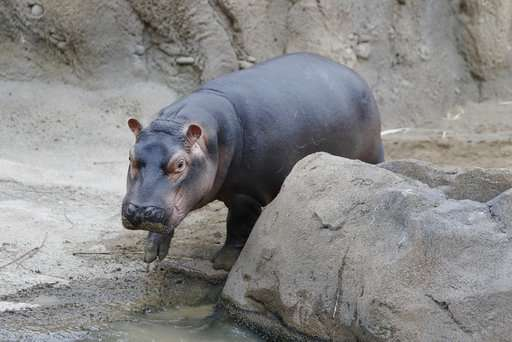 Hippo-y birthday to Fiona! The popular preemie is turning 1