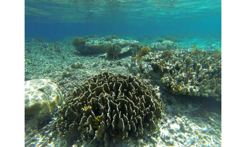 Indonesia has some of the world's finest corals but many are also badly damaged