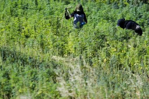 Lebanon's cannabis heartland, Bekaa, hopes for legalization