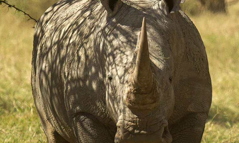 Study finds potential benefits of wildlife-livestock coexistence in East Africa