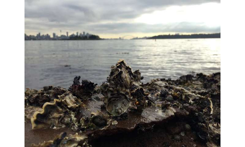 The surprising benefits of oysters (and no, it's not what you're thinking)