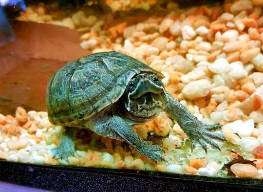 Turtles can make great pets, but do your homework first
