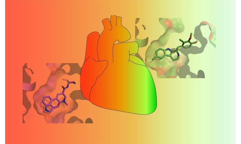 Scientists discover intricacies of serotonin receptor crucial for better therapeutics
