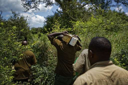 Battle to save Africa's elephants is gaining some ground