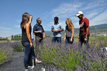 UBC researchers dig to get to the root of lavender's secrets