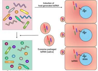 Researchers discover cellular messengers communicate with bacteria in the mouth