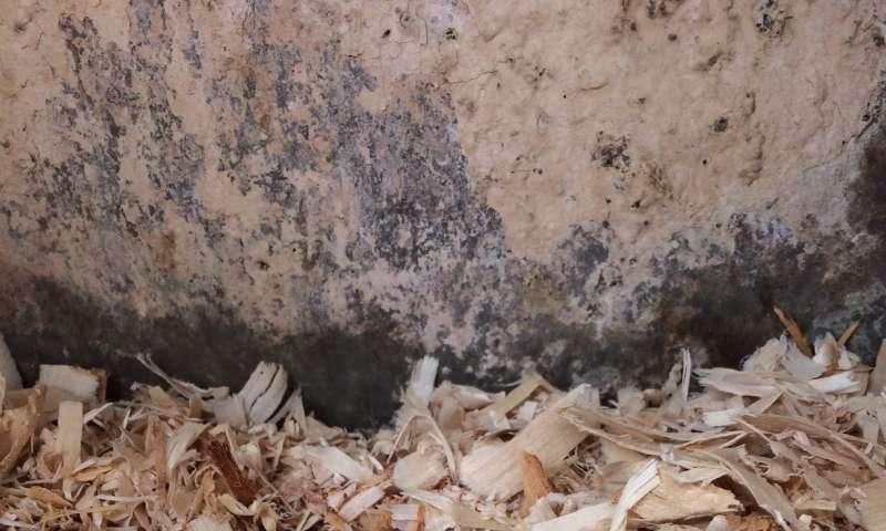 American kestrels provide important 'ecosystem services'