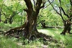 Conservation through religion? Scientists confirm that sacred natural sites confer biodiversity advantage