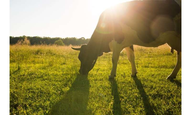 How climate change will affect dairy cows and milk production in the UK – new study