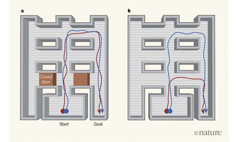 Scientists make a maze-running artificial intelligence program that learns to take shortcuts