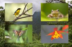 Study provides framework to measure animal and plant traits for sustainability goals