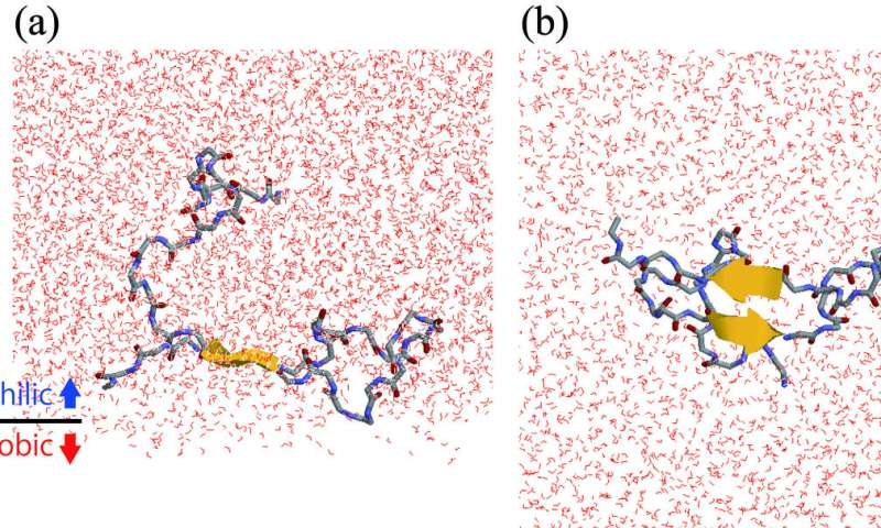 A boundary dance of amyloid-β stepping into dementia