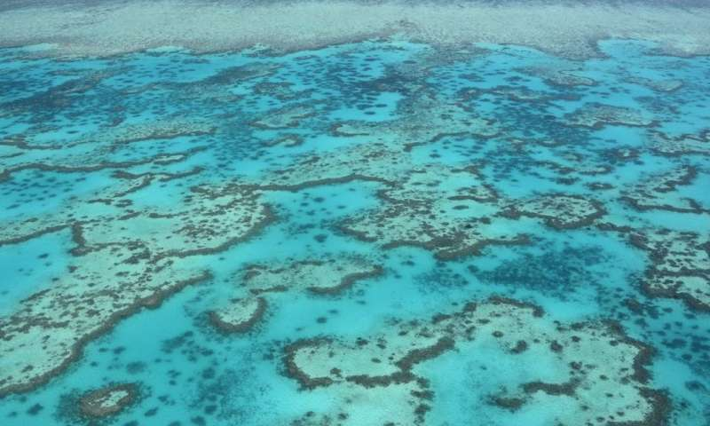 Acid oceans will dissolve coral reef sands within decades