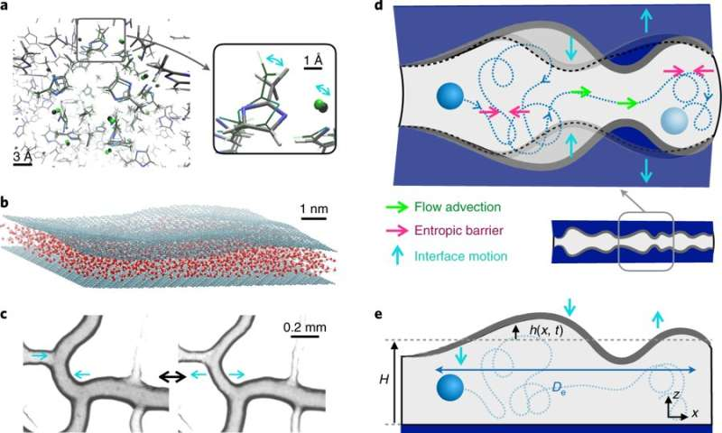 A complex interplay between transport and dispersion across wiggling nanopores.