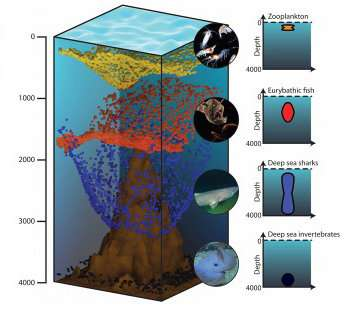 Adding the third dimension to marine conservation