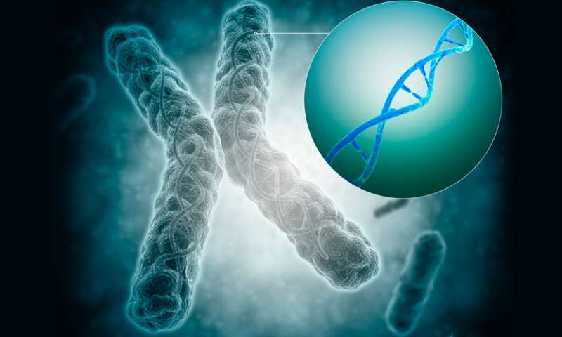 A deeper understanding of chromosome capping could improve therapies for both cancer and aging