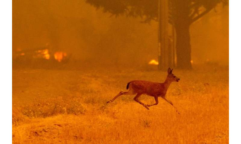 A deer runs from flames as the Ranch Fire tears down New Long Valley Rd near Clearlake Oaks, California, on Saturday