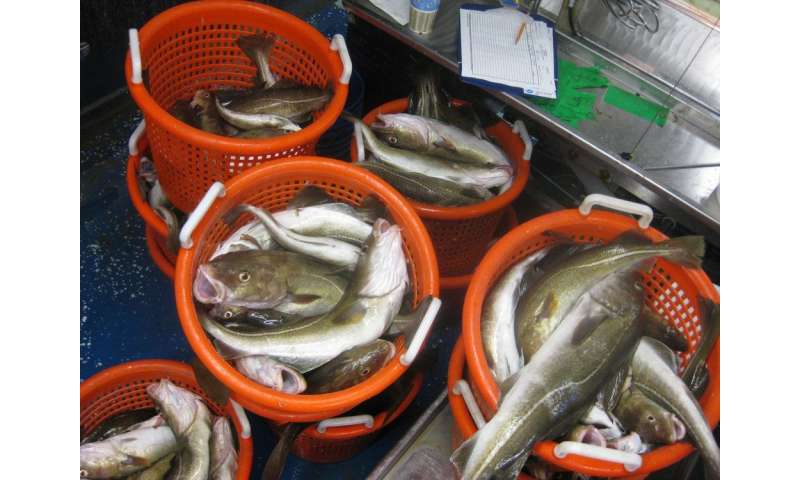 Adult fish 'predict' availability of food for their young