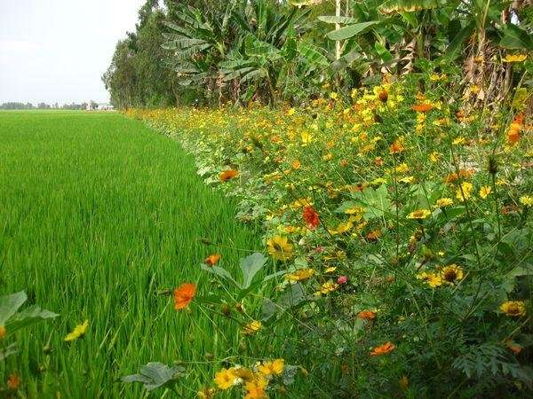 Agro-ecology: A way for farming systems in the global South to adapt to climate and global change