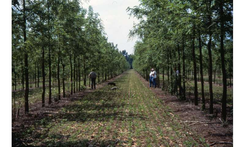 Agroforestry systems may play vital role in mitigating climate change