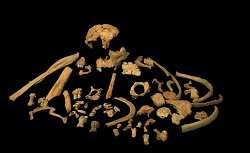 A human fossil species in western Europe could be close to a million years old