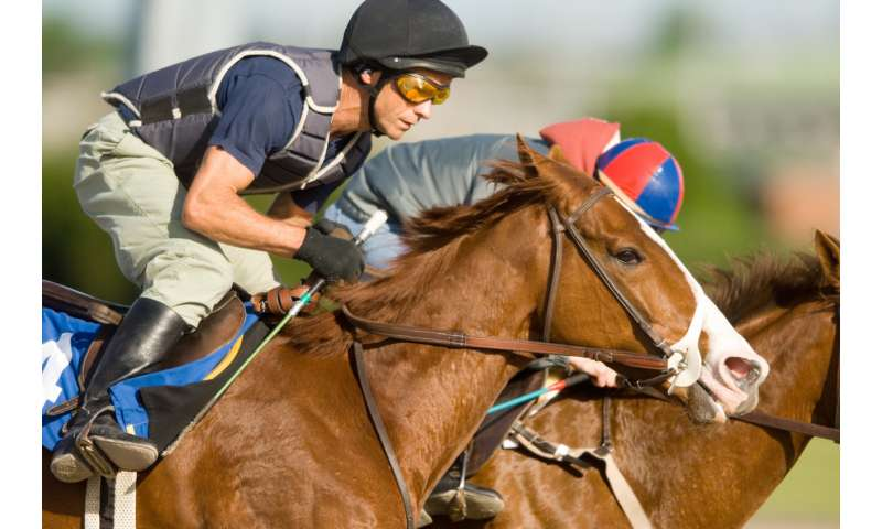 Airway disease in racehorses more prevalent than previously thought, U of G study finds