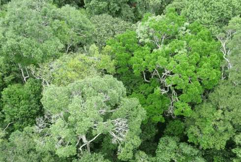 Amazon forests stabilise each other during drought