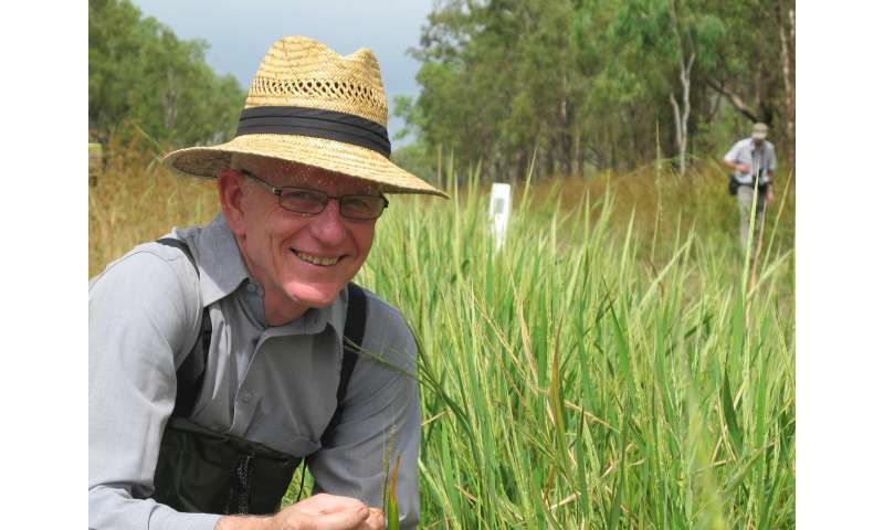 Ancient rice heralds a new future for rice production