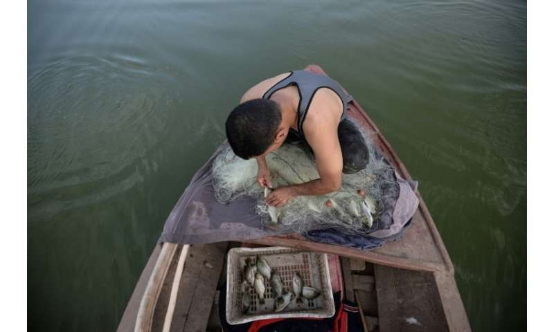 An Egyptian Fisherman removes fish from a net on his boat in the waters of the Pharaonic Sea