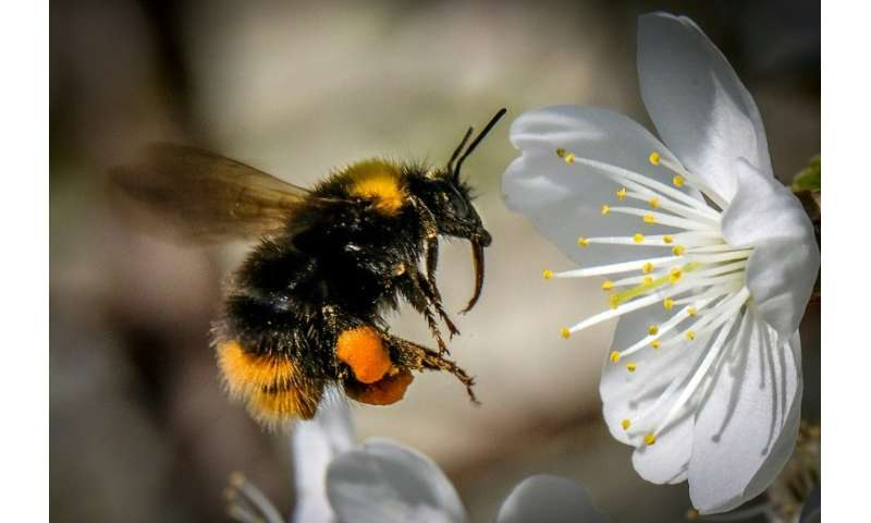 A new class of insecticide—'can have a negative impact on the reproductive output of bumblebee colonies'