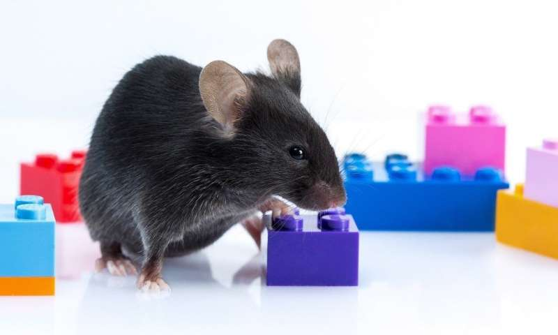 Animal cyborg: Behavioral control by 'toy' craving circuit