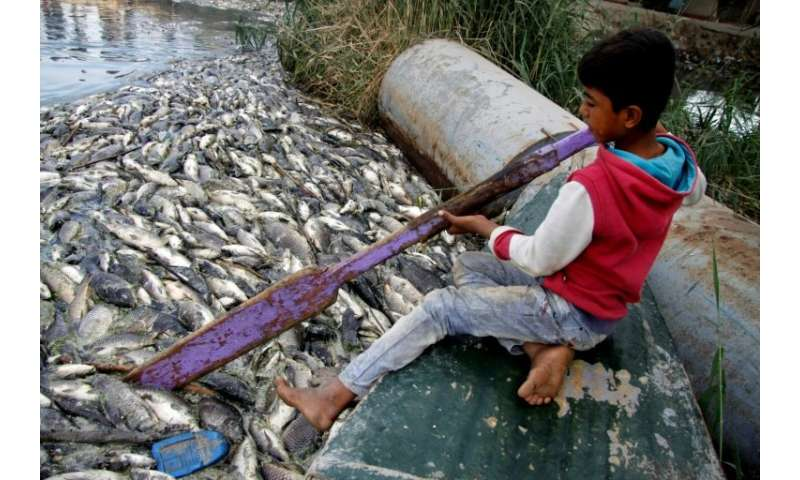 An Iraqi boy clears dead fish floating on the Euphrates River near the town of Saddat al-Hindiyah, on November 2, 2018
