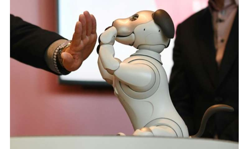 An owner plays with a  Sony robot dog 'Aibo' which is packed with artificial intelligence and internet capability
