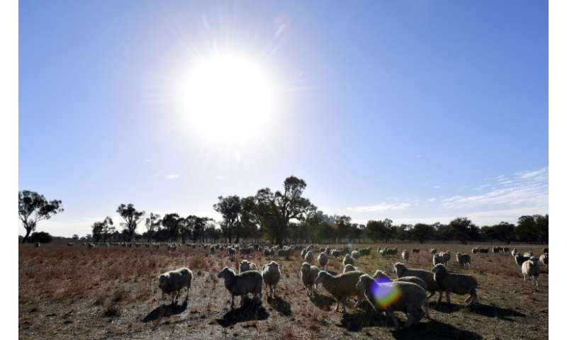 A prolonged dry period in Eastern Australia has left farmers struggling to feed their cattle and sheep