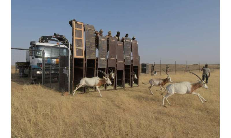 Armed conflicts in Sahara and Sahel endangering wildlife in the region