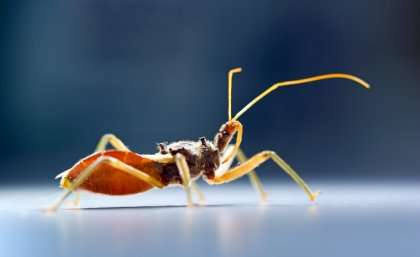 Assassin bug's venom system packs a deadly double